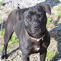 Adopt A Pet :: Emmett **URGENT** - Columbia, TN
