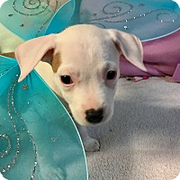Adopt A Pet :: Miller - Atlanta, GA
