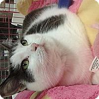 Adopt A Pet :: Kiki - Chesapeake, VA
