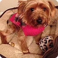 Adopt A Pet :: Dolly - Cheyenne, WY