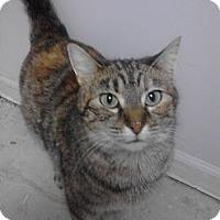 Adopt A Pet :: Bada - Sterling Hgts, MI