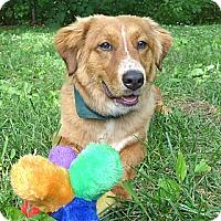 Adopt A Pet :: Winnie - Mocksville, NC