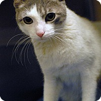 Adopt A Pet :: Angel - McDonough, GA