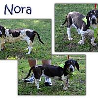 Adopt A Pet :: Nora - Marietta, GA
