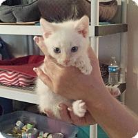Adopt A Pet :: Lexus - Lawrenceville, GA