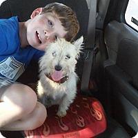 Adopt A Pet :: Dixie - Lawrenceville, GA
