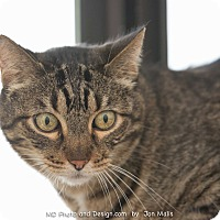 Adopt A Pet :: Spike - Fountain Hills, AZ