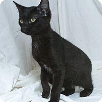 Adopt A Pet :: Carmen V - Sacramento, CA