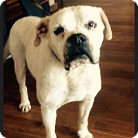 Adopt A Pet :: Atticus - Costa Mesa, CA