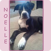 Adopt A Pet :: NOELLE - Dallas, NC