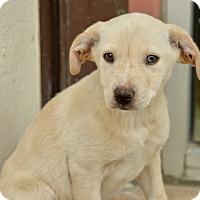 Adopt A Pet :: Jonny - San Antonio, TX