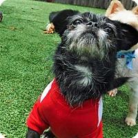 Adopt A Pet :: Nike - Dublin, CA