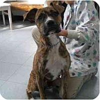 Adopt A Pet :: Hera - Washington, NC
