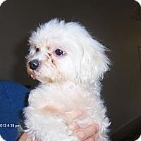 Adopt A Pet :: Dutchess - Jacksonville, FL