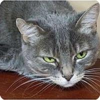 Adopt A Pet :: Nikki - Secaucus, NJ