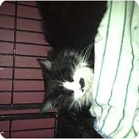 Adopt A Pet :: SHOPIA - Clay, NY
