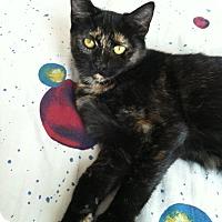 Adopt A Pet :: Gwen - Riverhead, NY