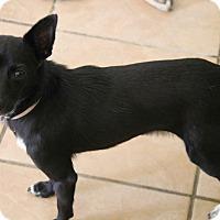 Adopt A Pet :: Shelby - Yuba City, CA
