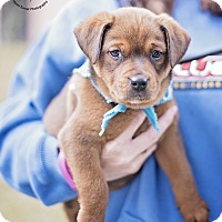 Adopt A Pet :: Tank - Kingwood, TX