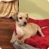 Adopt A Pet :: Sinkers - Tumwater, WA