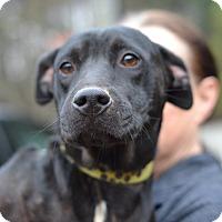 Adopt A Pet :: LIfe - Board Game Mom - Acworth, GA