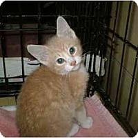 Adopt A Pet :: Blondie - Warren, OH