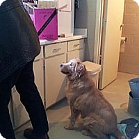 Adopt A Pet :: Dwight D Mr. Happy - Wallaceburg, ON