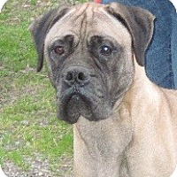 Adopt A Pet :: Gordon - Roy, WA