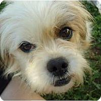 Adopt A Pet :: NaNook - Allentown, PA
