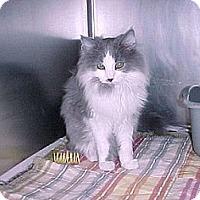 Adopt A Pet :: Charlotte - East Hanover, NJ