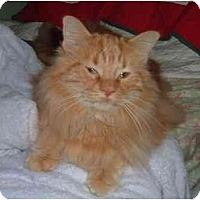 Adopt A Pet :: Berkley - Troy, OH