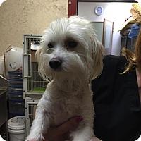 Adopt A Pet :: Alushe - Anaheim, CA