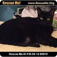 Adopt A Pet :: Jinn - Waldorf, MD