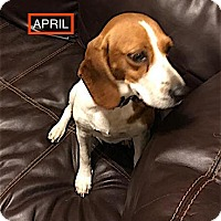 Adopt A Pet :: April - Houston, TX