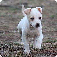 Adopt A Pet :: Corona - Millersville, MD