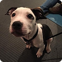 Adopt A Pet :: Frank - Rochester, NY