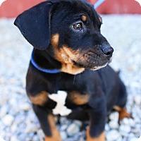 Adopt A Pet :: MacKay - Harrisonburg, VA
