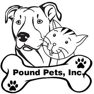 Domestic Shorthair Kitten for adoption in Granite City, Illinois - Foster Homes Needed