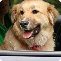Adopt A Pet :: Doogie - New City, NY