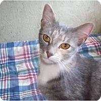 Adopt A Pet :: TJ - Morris, PA