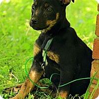 Adopt A Pet :: Margo - Staunton, VA