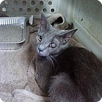 Adopt A Pet :: Sally - Willington, CT