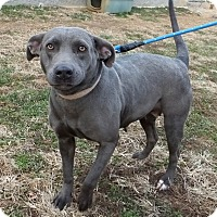 Adopt A Pet :: Bluebelle - Franklin, KY