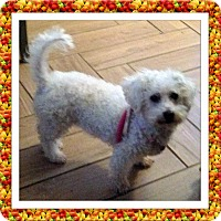Adopt A Pet :: Adopted!!Sophie - KY - Tulsa, OK
