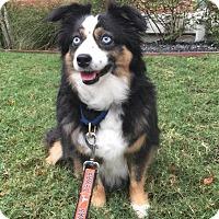 Adopt A Pet :: Cali - Austin, TX