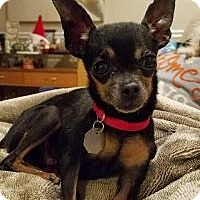 Adopt A Pet :: Toodles - Salt Lake City, UT