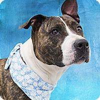 Adopt A Pet :: Ruie - Cincinnati, OH