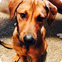 Adopt A Pet :: Dixie - Christiana, TN