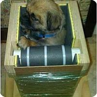 Adopt A Pet :: Jello-PA - Emmaus, PA