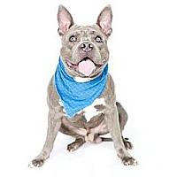 Adopt A Pet :: Fletch - Orlando, FL